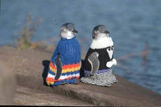 Penguin_jumpers