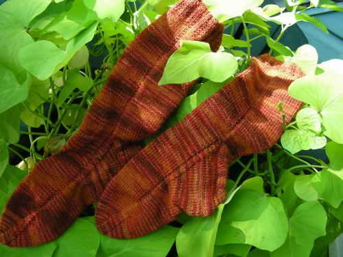 simple orange socks