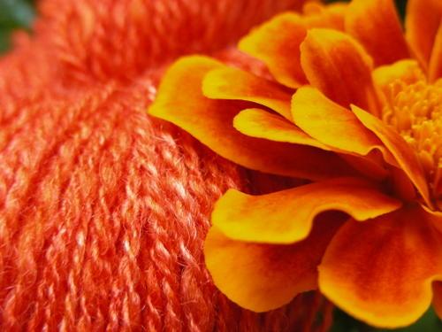 Creamsicle with marigold