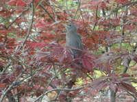Babybird_1