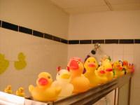 Ducksinarow