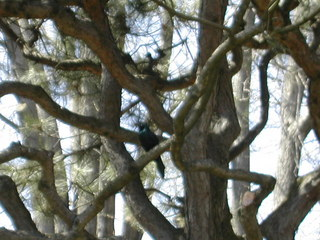 Fangornforest